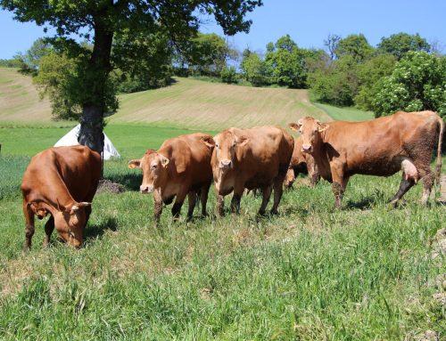 """Aperto il bando 4.1.01 """"Investimenti in aziende agricole in approccio individuale e di sistema"""""""